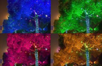 Подсветка деревьев в парке